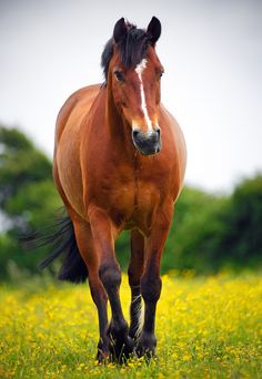 Horse on South Downs Way by Alan MacKenzie on Flickr