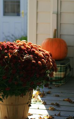 Old Centennial Farmhouse: Farmhouse Porch: Autumn in Orange! Fall Halloween, Autumn Day, Autumn Home, Winter, Mourning Dove, October Fall, Happy Fall Y'all, Fall Pumpkins, Colors
