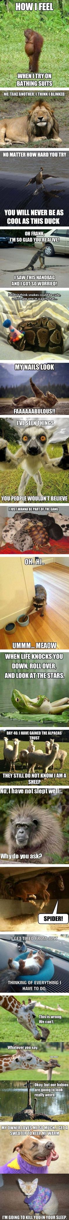 Funny Animal Memes Pictures, Photos, and Images for Facebook, Tumblr, Pinterest, and Twitter