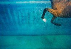 Tim Flach Equus on Blue