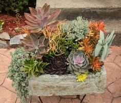 I began collecting succulents a few years ago when I got the bug to make s. Succulent Arrangements, Planting Succulents, Dish Garden, Cactus Y Suculentas, Air Plants, Garden Projects, Trees To Plant, Planter Pots, Floral Wreath