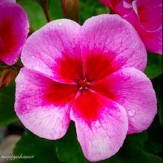 KATSE VASEMPAAN PÄIN: ALKUKESÄN LUONTOTARINAT Greenery, Colorful, Rose, Garden, Nature, Plants, Image, Beautiful, Flowers