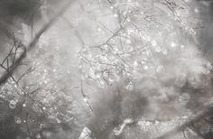 mlodzikova-magic-plant-8.jpg (800×523)
