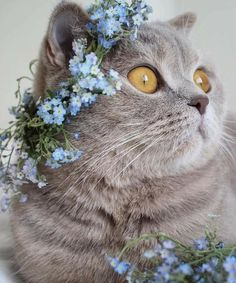cats - cute and Wuvely Pretty Cats, Beautiful Cats, Crazy Cat Lady, Crazy Cats, I Love Cats, Cute Cats, Animals And Pets, Cute Animals, Cat Whisperer