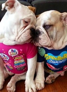 """So DogGone Funny!: - """"Oh Baby, I am crazy in love with you!""""..."""