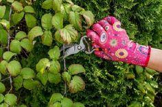 Правила обрезки малины для начинающих – БУДЬ В ТЕМЕ