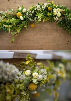 Image result for CRASPEDIA BILLY BALLS YELLOW garland