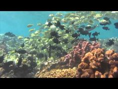 Diving at Flying Fish Cove, Christmas Island - March 2012