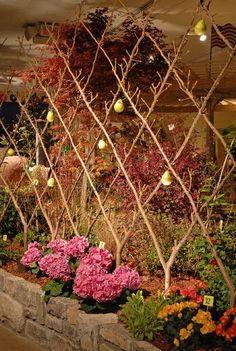 Pear tree espalier for the garden