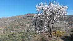 Anden del af vandreruten Los Cahorros ved Monachil byder på bjergtagende udsigter. Om foråret kan man opleve de berømte mandeltræer i fuldt flor! #Cahorros #Monachil #Granada #Andalusien #hiking