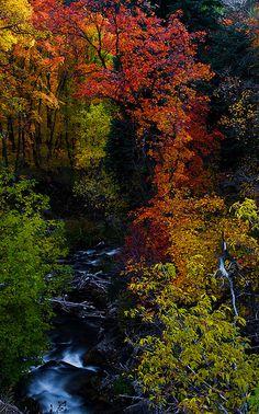 Millcreek Canyon, Utah; photo by Tucapel