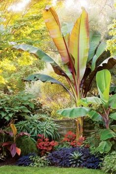 Creative use of tropicals at Chanticleer Garden, Wayne, Pennsylvania....Love the big-leaved tropical red banana and the colors...