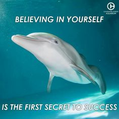 Photo shared by Giuseppina Caggegi on April 04 2020 tagging possi Orcas, Dolphin Tale 2, Dolphin Art, Dolphin Quotes, Clearwater Marine Aquarium, Baby Dolphins, Bottlenose Dolphin, Secret To Success, Animals Of The World