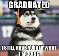 Need a good laugh? You can always depend on a Husky to be your personal comedian. But don't take my word for it – check out 25 of the funniest . Read Hilarious Husky Memes and GIFs Husky Jokes, Funny Husky Meme, Dog Quotes Funny, Funny Dogs, Cute Dogs, Funny Memes, Husky Humor, Dog Jokes, Cute Animal Memes