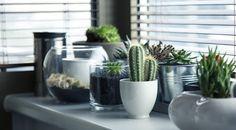 Poche cure e molta resa estetica: le piante grasse in appartamento arredano con stile e rendono la casa più accogliente.  http://www.arredamento.it/piante-grasse-da-appartamento.asp  #piantegrasse #verde #appartamento