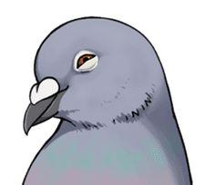 Cute Pigeon by Studio Pigeon Pretty Drawings, Cool Art Drawings, Cartoon Drawings, Animal Drawings, Pigeon Funny, Cute Pigeon, Feral Pigeon, Rick And Morty Poster, Cartoon Birds