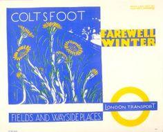 Farewell winter; coltsfoot, by Walter E Spradbery, 1936