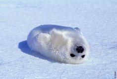 Awww! Shiny little seal!