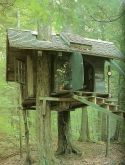 Stunning Crooked Tree House Design For Fun Children's Playground Fairy Tree Houses, Cool Tree Houses, Tree House Playground, Beautiful Tree Houses, Simple Tree House, Wooden House Design, Crooked Tree, Tree House Designs, Tree Wallpaper