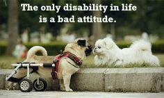 What does Disability mean to you? to some people, the only disability there is, is a bad attitude. In that case most people that we would consider to have disabilities would not be disabled, but loads of able-bodied people would be considered disabled! Love My Dog, Pug Love, Animals And Pets, Funny Animals, Cute Animals, Talking Animals, Unique Animals, Baby Animals, Funny Animal Videos