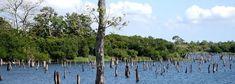#panama Canal de Panamá inicia vertidos preventivos en lagos Gatún y Alhajuela - TVN Panamá #orbispanama