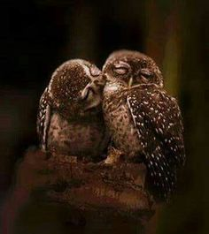 Image viaAn owl knows all the secrets of the forest, but tells them in a voice we cannot understand.Image viaBaby Owl Pictures: Photos of Cute Animals, Young OwlsImage Animals And Pets, Baby Animals, Funny Animals, Cute Animals, Baby Owls, Nature Animals, Wild Animals, Beautiful Owl, Animals Beautiful