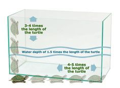 helpful infant turtles pet aquarium exceptional : It can be slightly uncomfortable to publish the next few paragraphs, not only simply because all people you never know us is aware I am a turtle along. Turtle Care, Pet Turtle, Baby Turtles, Tiny Turtle, Yellow Bellied Slider, Red Eared Slider Turtle, Turtle Aquarium, Turtle Pond, Tortoise Aquarium