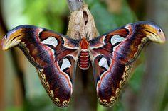 Snake butterfly
