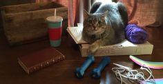 Internet entra em colapso quando um gato faz cosplay de outro gato!