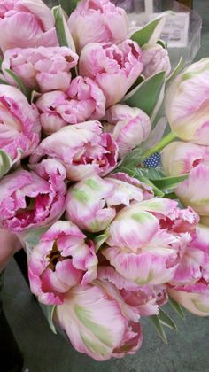 parrot tulips - my favorite flower!