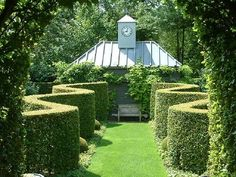 Serpentine hedge, probably of Taxus baccata/Yew