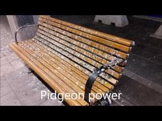 Pidgeon Power