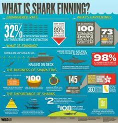 What is shark finning and why should you care?