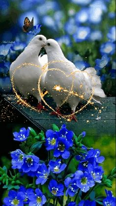 Gardens Discover Purity of the Beautiful Love Pictures Beautiful Gif Beautiful Roses Love You Gif Love You Images Beautiful Nature Wallpaper Beautiful Landscapes Vogel Gif Rose Flower Wallpaper Wallpaper Nature Flowers, Rose Flower Wallpaper, Beautiful Flowers Wallpapers, Beautiful Rose Flowers, Beautiful Nature Wallpaper, Beautiful Gif, Butterfly Wallpaper, Love Wallpaper, Beautiful Birds