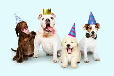 We wish you the best in 2021! #CBD #dogcbd #catcbd #petcbd www.EmishaWellness.com Dog Dna Test, Cat Years, Free Dogs, Pet Treats, Happy Animals, Live Long, Small Dogs, Pet Care, Your Pet