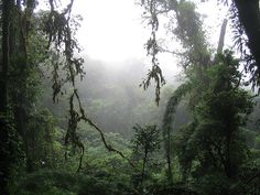 Costa Rica Jungle. Went with Monica and Cezar Petriuc. Drove the Pacific coast. 2009 trip.