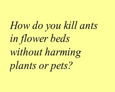 How do you kill ants in flower beds without harming plants or pets?