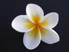 Google Image Result for http://www.adimagephotos.biz/aphoto-images/AI%2520photo%2520Thumbs/Flowers%2520Thumbs/Frangipani79f.jpg