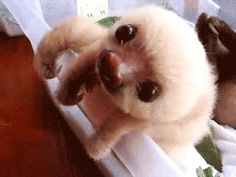 This sloth who is so cute even she can't handle it   Community Post: 15 Sloth GIFs You Need To See Today