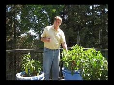▶ Pepper Growing, Container Mix Comparison - YouTube