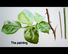 Short test preview of the Watercolor DVD 'How to paint leaves' by Doris Joa