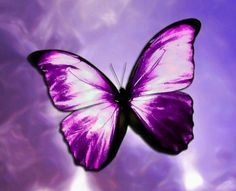 Purple and a butterfly!?
