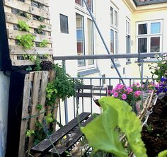 A fragment of the process of my Copenhagen balcony vertical garden. Worth waiting for! #vertical garden #pallehave #palletgarden #Balcony #towngarden #urbangarden