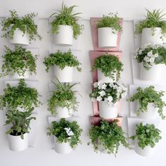 house plants, plant ideas, healthy, decoration,  self-watering system, wall decoration, energy, connection, durability, kickstarter, support us