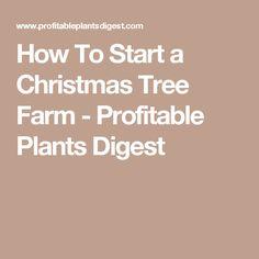 10 tips to start a christmas tree farm to make money homestead pinterest christmas tree farm extra money and christmas tree