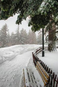 Winter Forest, Winter Szenen, Winter Love, Winter Magic, Winter Walk, Winter Holidays, Winter White, Snow Pictures, All Nature
