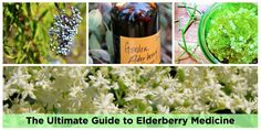 Plants In France: The Ultimate Guide to Elderberry Medicine
