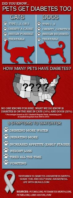 Diabetes in cats & dogs