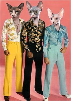 Cat, Set of 4, Mod 70's Cats, sphynx cats, fashion, color photography, mixed media, collage, fun, silly, greeting cards. $12.00, via Etsy.
