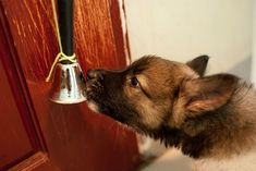 50 Best Doggy Doors Images Dog Rooms Dog Houses Pets